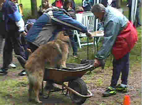 D'abord il faut persuader le chien à monter dans la brouette