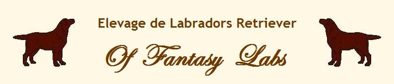 Banniere fantasy